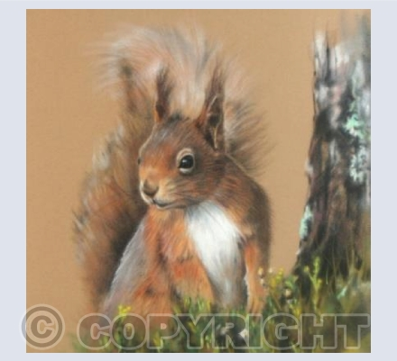 Rufus the Red Squirrel
