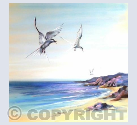 'Taking Terns'