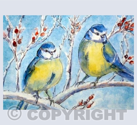 Bluetits and Rose Hips