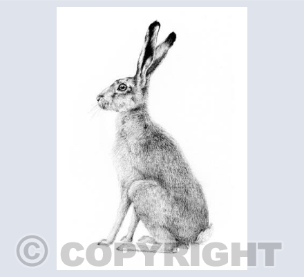 Hare Waiting