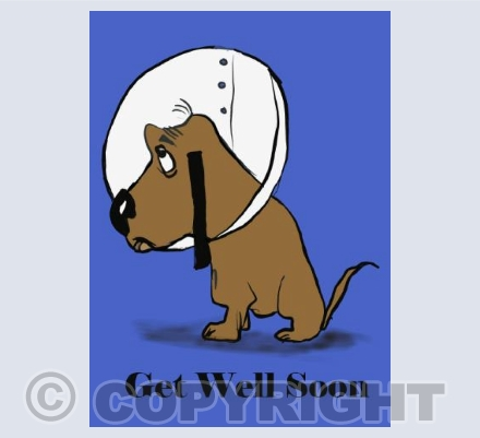 Get well soon - dog collar