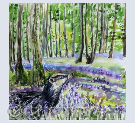 Badger in bluebells