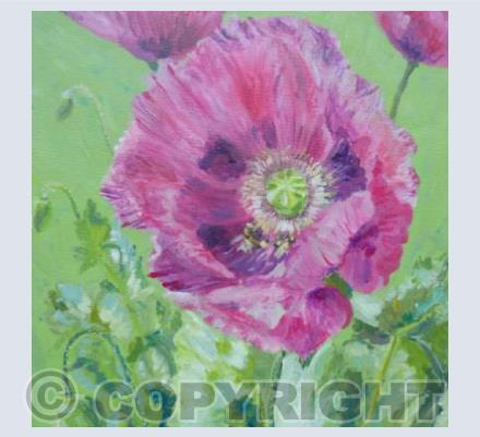 Poppies and bees