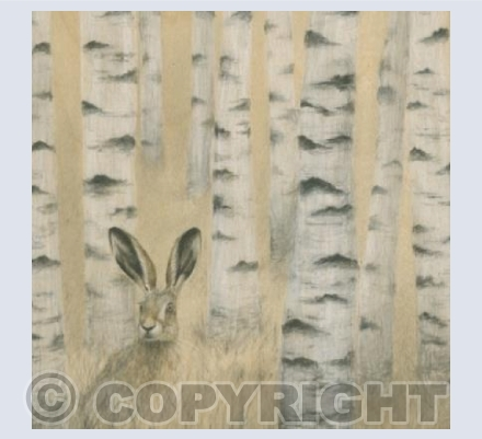 Hare in Birch