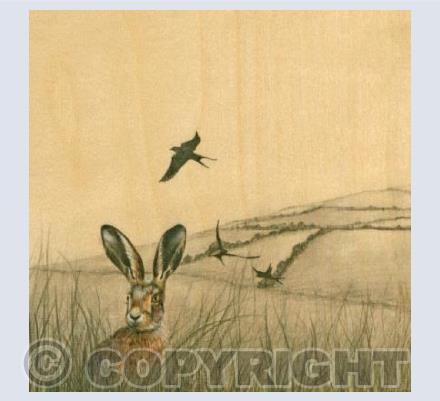 Hare And Swifts