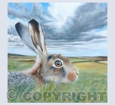Hare and Sky