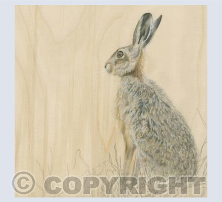 Brown Hare in Grass
