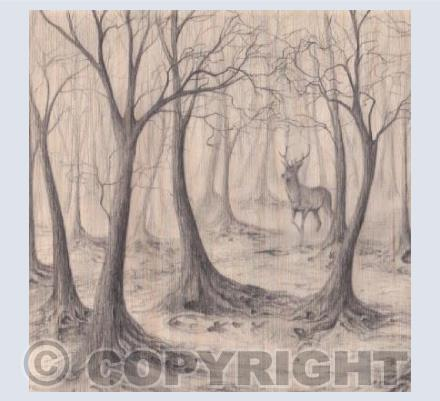 Stag in Woods