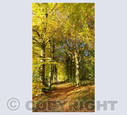 Autumn Scene Photo Cards