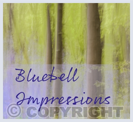Bluebell Impressions