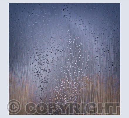 Bluebells at Dusk