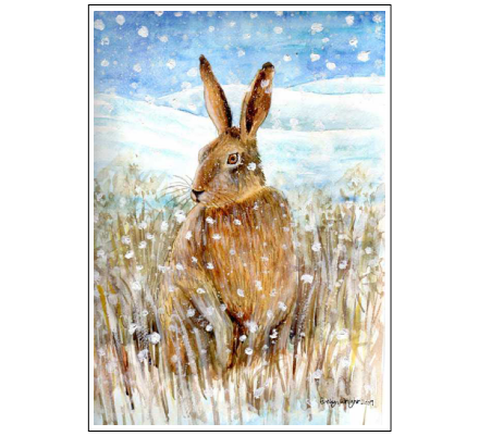 Hare in the snow by Evelyn Wright